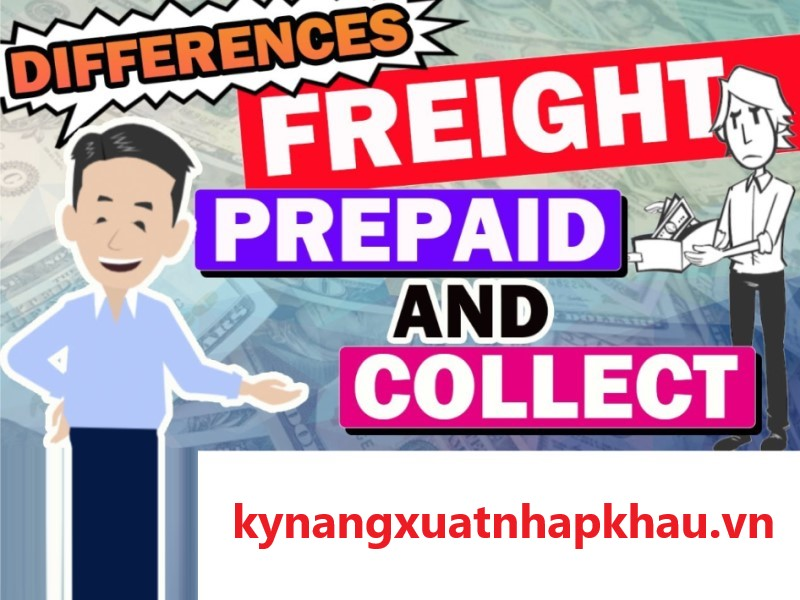 Freight Prepaid là gì? Sự khác biệt giữa Freight collect và Freight prepaid